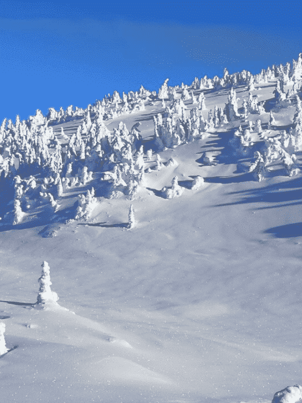 BigWhite optimized